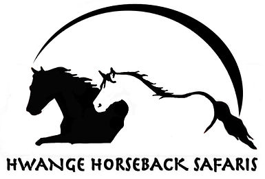 horses, running, sunset, hwange horseback safaris, black and white, riding, horse safaris, wildlife, safaris, photographic safaris