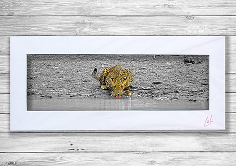 The Stare and Drink (Matted Print)