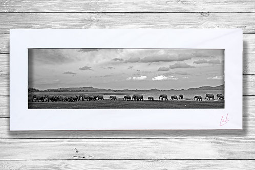 Elephant Parade To Water (Matted Print)