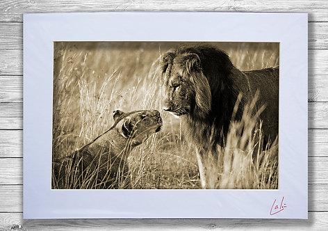Love on the Serengeti (Matted Print)