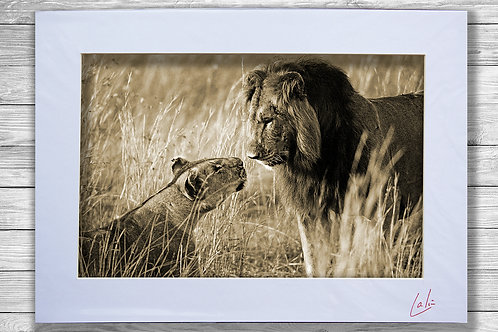 Love on the Serengeti (Matted Print)