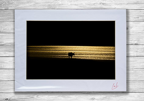 Solitary Buff (Matted Print)