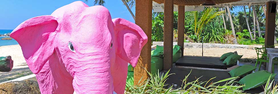 Surf Shack and Our Pink Elephant