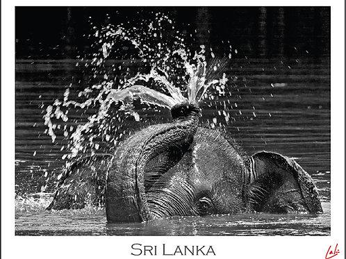 Elephant Fountain (Postcard)