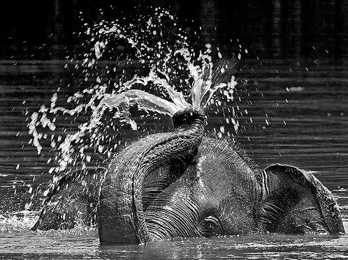 Elephant Fountain (Large Print)