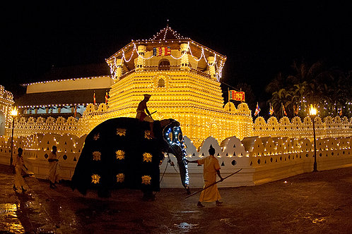 Kandy Temple and Elephant (Large Print)