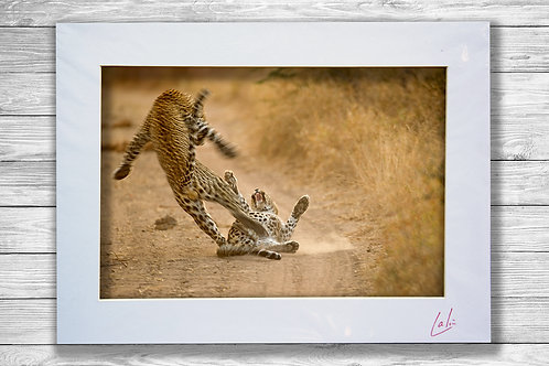 Leopards Mating (Matted Print)