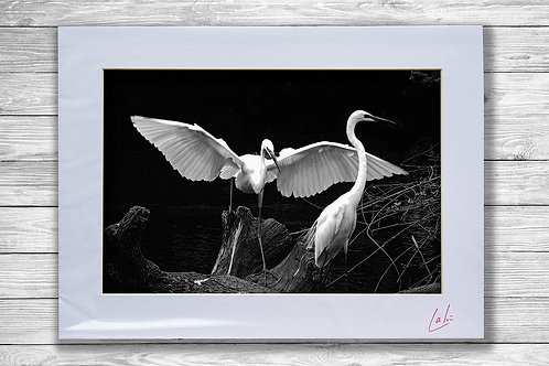 Two Herons (Matted Print)
