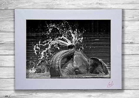 Elephant Fountain (Matted Print)