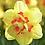 Thumbnail: Narcissus