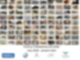 Copy of Stranding 2018-19 turtles.png
