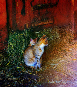 Kittens in the Barn