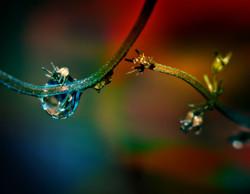Rain on Vine