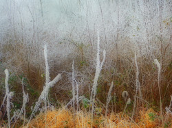 Hoarfrost in the Bush