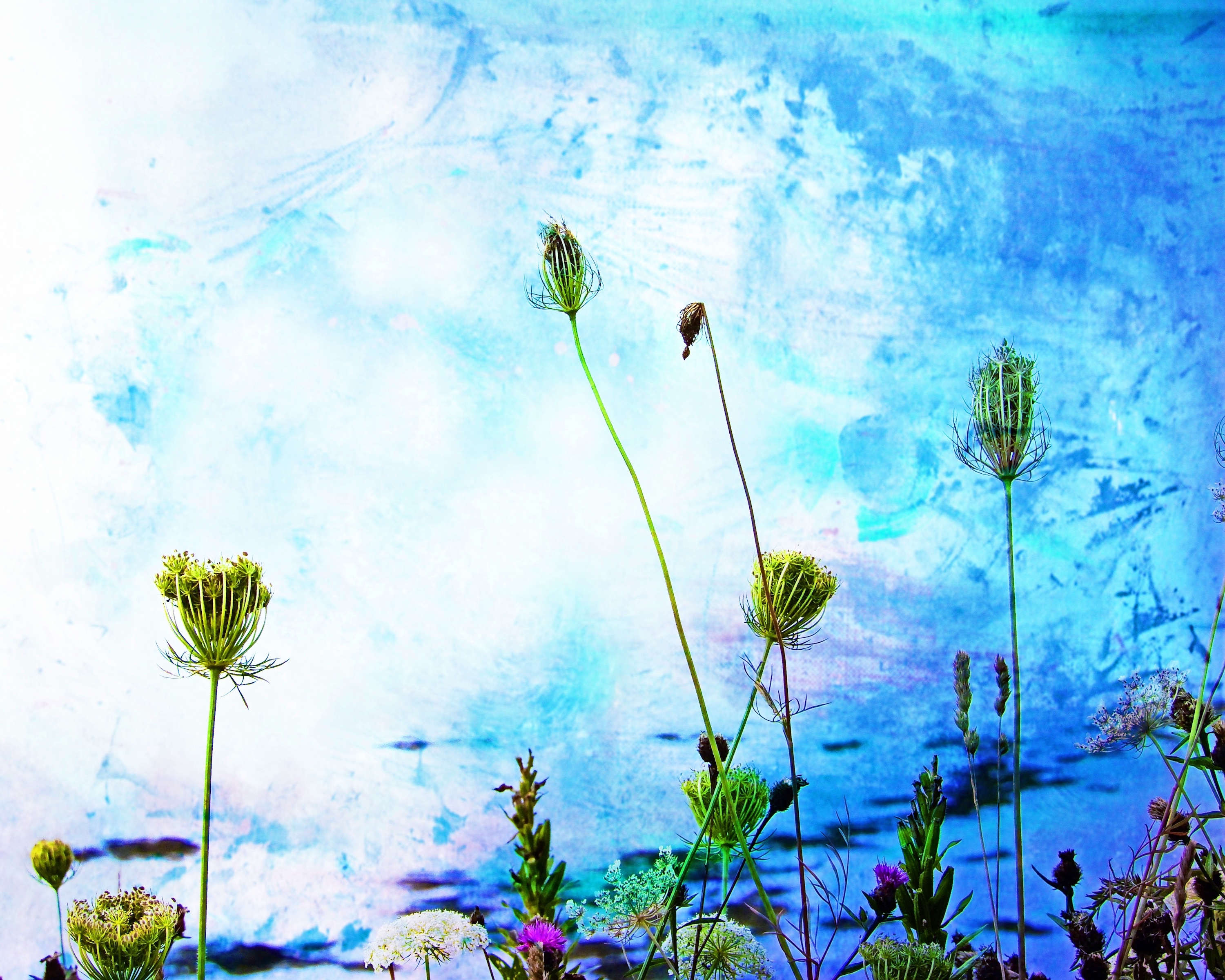 Weeds & Paint