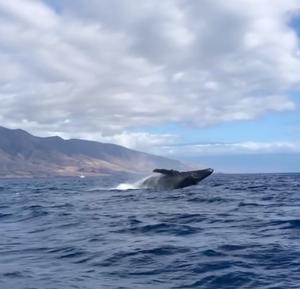 Makai Adventures Maui Whale Watch Tour