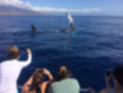 Whale Watch on Maui