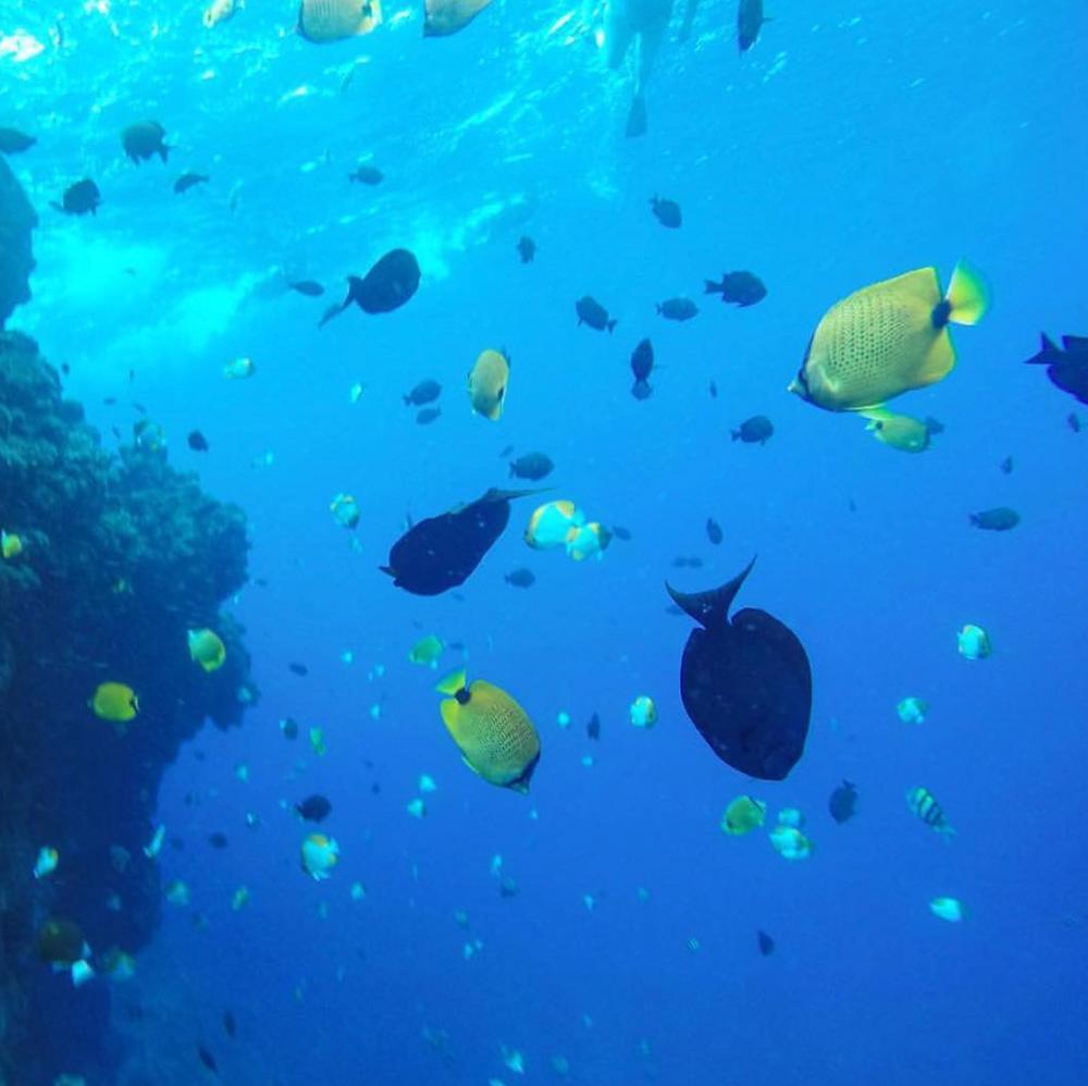 Kainani Sails Snorkeling Tours Maui