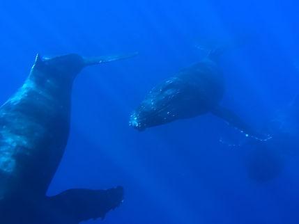 Lahaina Whale Watching