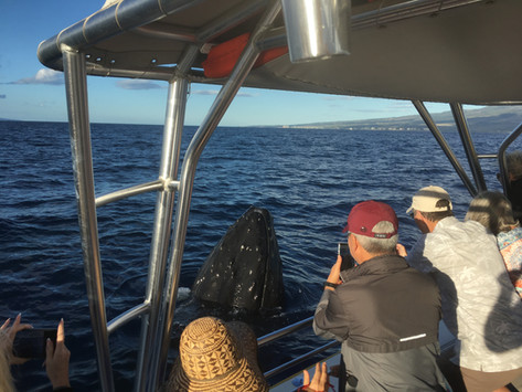Maui Muggings on the Rise