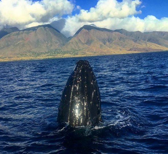 Makai Adventure Maui Whale Watch Tour