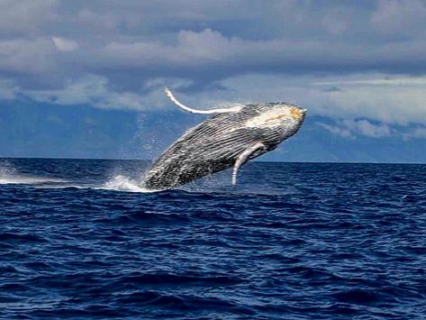 Whale Of A Time On Maui