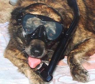 Maui Snorkel Dog