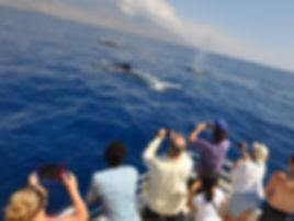Whale Watch Photography Maui