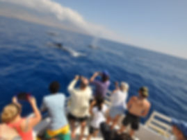 Whale Watch Maui
