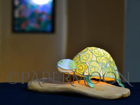 【生徒作品】カメちゃんのランプ&展示のお知らせ | 手作りライト照明教室 PAPERMOON(東京 自由が丘)