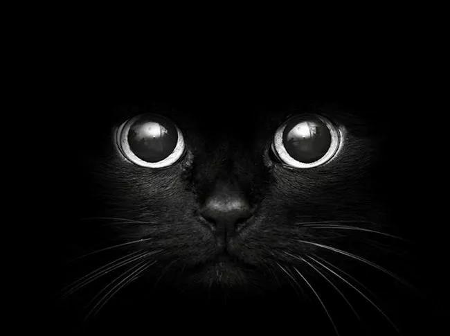 insomnio ansiedad gato psicólogo