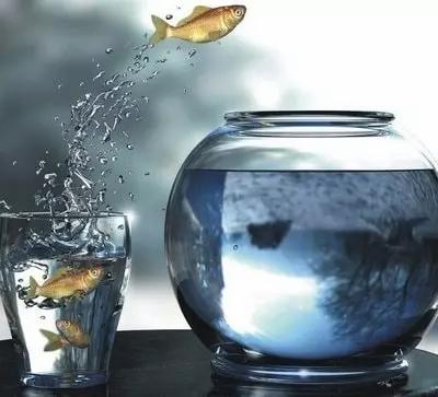 zona confort pez saltando psicólogo