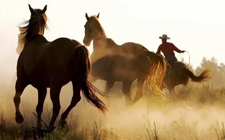 marlboro caballos tabaco