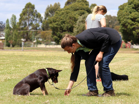 10 Skills to teach your dog and why.