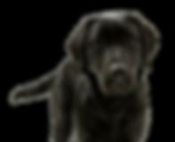Logo dog.png