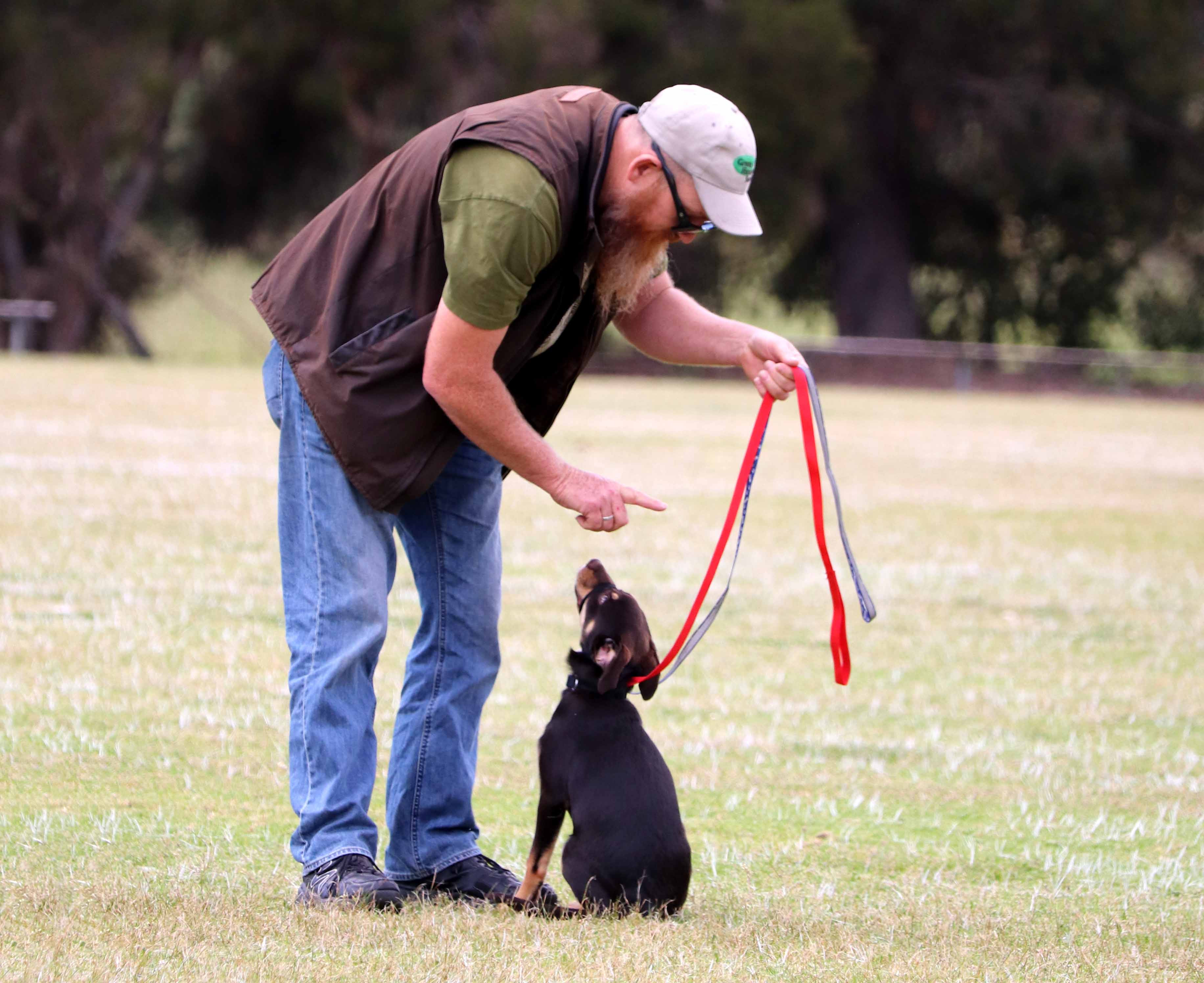 Puppy and Beginners Class