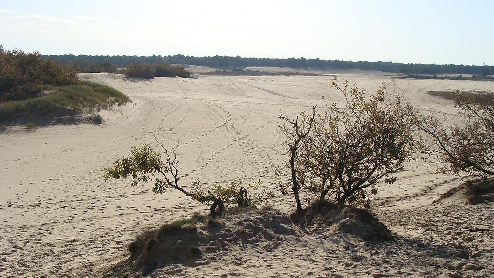 De Loonse en Drunense duinen