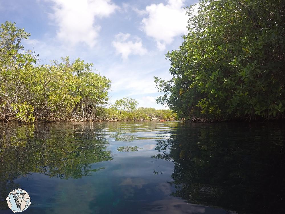 cenote manati tulum mexico