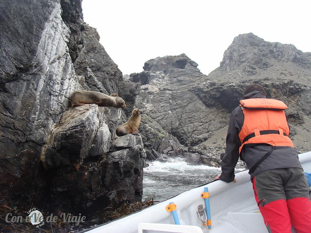 Reserva Natural Pingüino de Humboldt