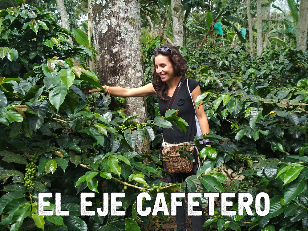 eje cafetero