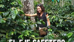 Descubriendo Colombia: el eje cafetero (desde Salento)