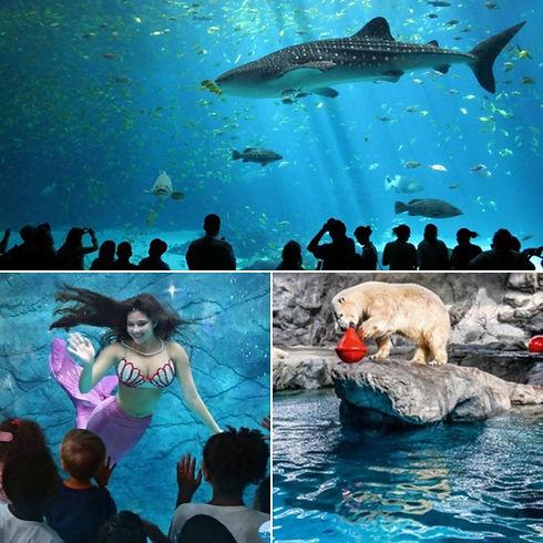 ebe-fun-passeios-parques-aquario.jpg