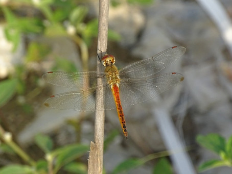 Wandering Glider Migrations