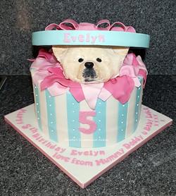 Pomeranian dog in a box cake