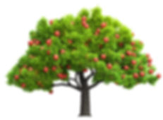Apple Tree - reduced size.jpg