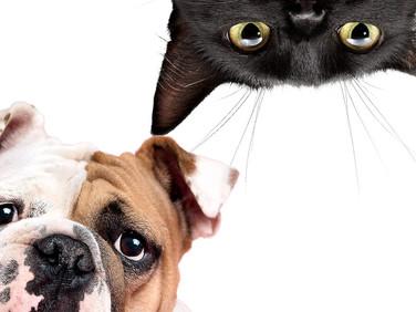 Глисты, глистная инвазия или гельминтозы у собак и кошек