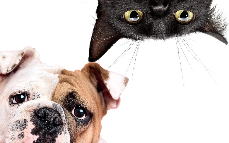 глистная инвазия симптомы у щенков