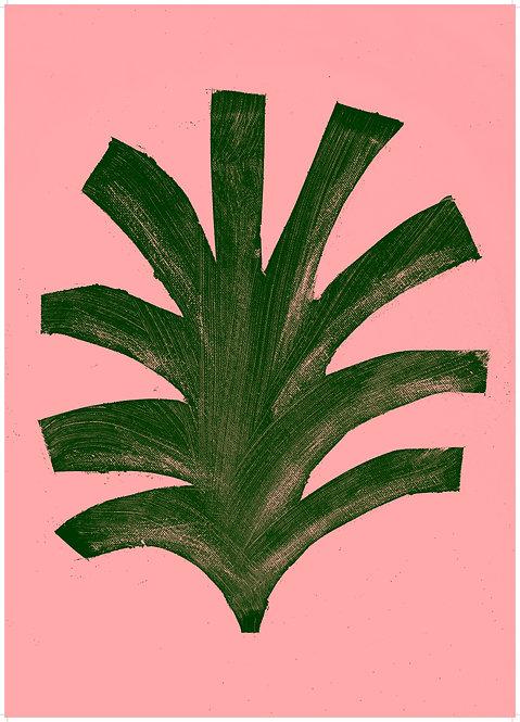 Pink Pine