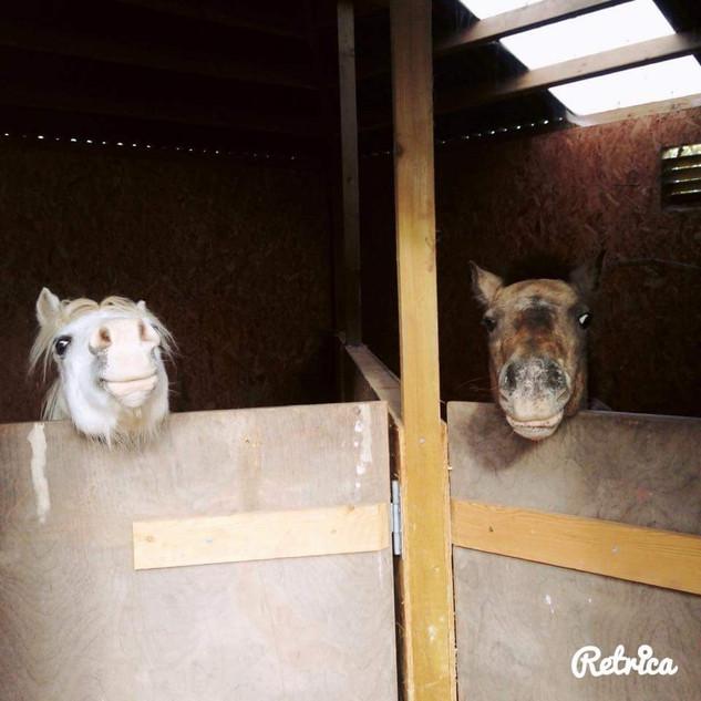 Polo & Millie