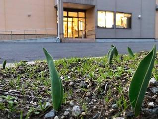 伸び伸び~!春よ来い
